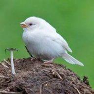 sparrows81